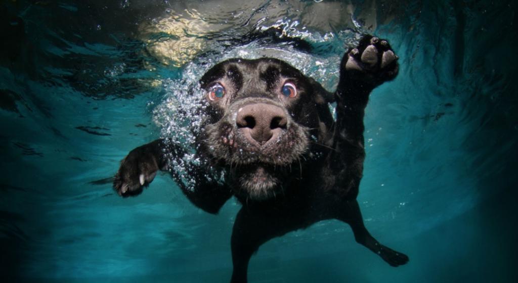 Canine Treatment