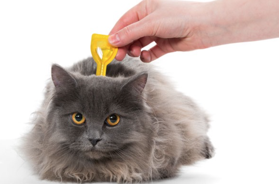 How To Avoid Cat Getting Fleas